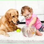 Успешное лечение бесплодия у собак